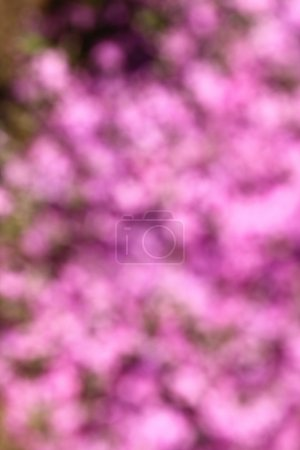 blurred purple flowers