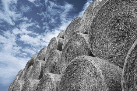 Photo pour Haystacks sur ciel bleu d'été - image libre de droit