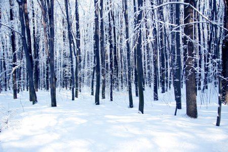 Photo for Winter park forest background - Royalty Free Image
