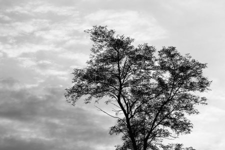 silhouette of a tree in nature