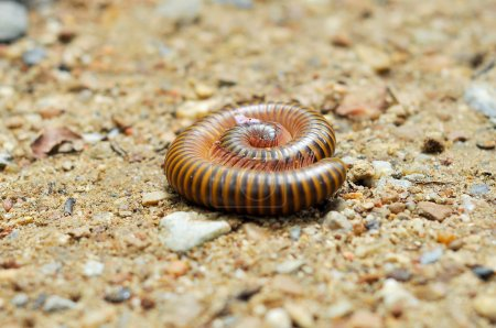 Millipedes are typically forest floor dwellers, oc...