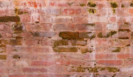 Brick wall with green algae
