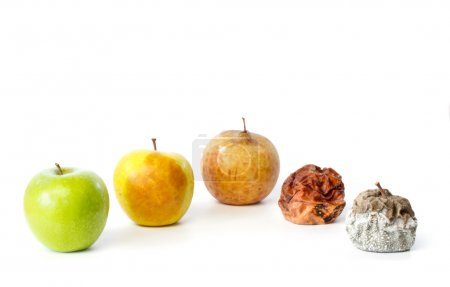 Five apples in different stages of decay