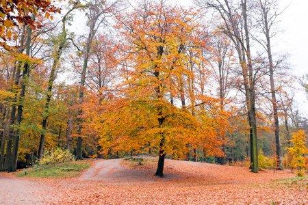 Photo pour L'automne dans les forêts aux Pays-Bas - image libre de droit