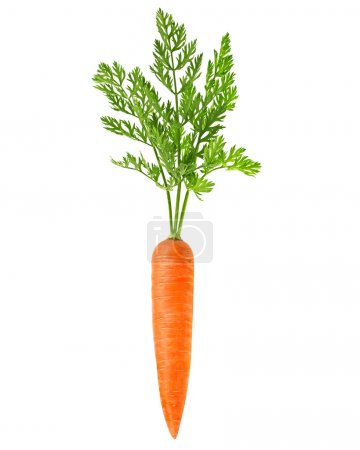 Photo for Carrot vegetable with leaves isolate - Royalty Free Image