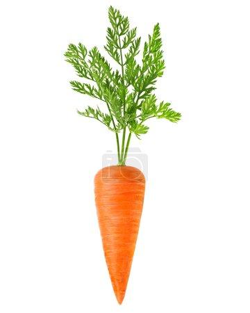 fresh carrots i