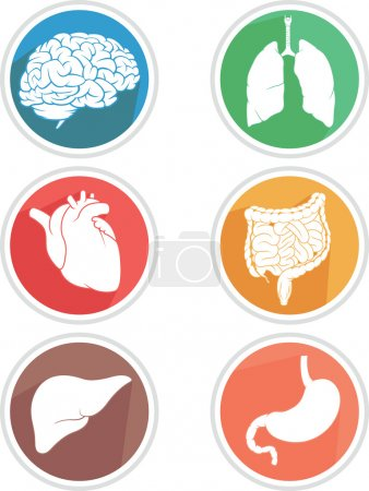 Illustration for A vector icon set of human body parts: brain, lungs, heart, liver, stomach and intestines. This vector is very good for design that need health or anatomy element. - Royalty Free Image