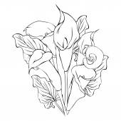 Outline drawing illustration of callas on white background
