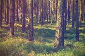 vintage forest background