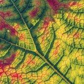 Zelený list, přírodní pozadí