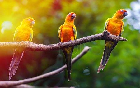 Exotic parrots