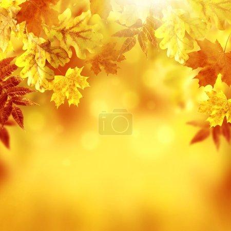 Photo pour Feuilles d'automne - image libre de droit