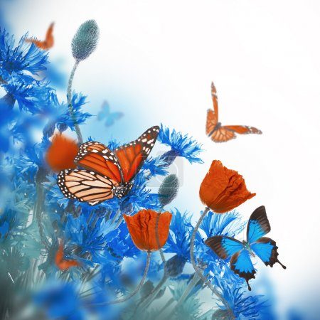 Poppies  and  cornflowers with butterflies