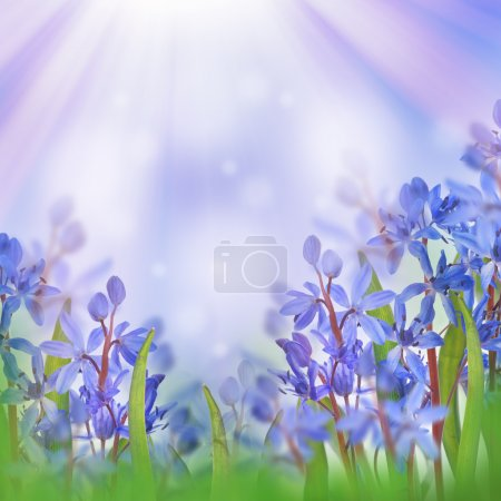 Photo pour Fond brouillé de fleur bleu de craquements de ressort. - image libre de droit