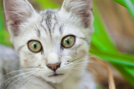 Close-up of a street cat