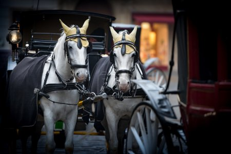 Horses and carriage on stefansplatz in Vienna