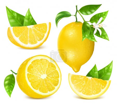 Illustration for Collection of different vector illustration of fresh lemons with leaves and blossom. - Royalty Free Image