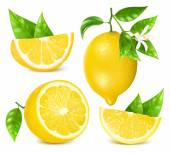 Collection of different vector illustration of fresh lemons with leaves and blossom