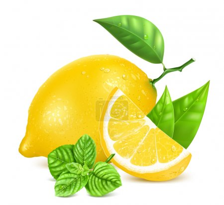 Illustration for Fresh lemon with leaves, slice of lemon, mint and water drops. Vector illustration. - Royalty Free Image