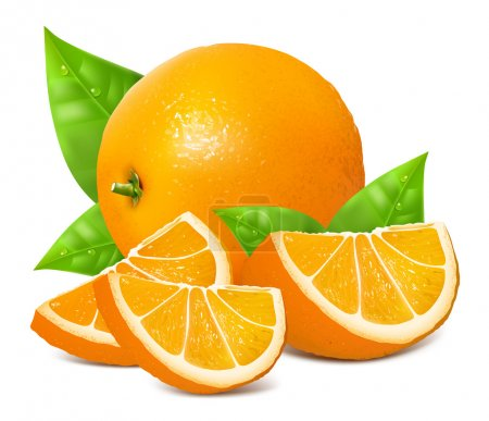 Illustration for Fresh ripe oranges with leaves. Vector illustration. - Royalty Free Image