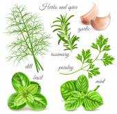 Big herbs and spice collection Vector illustration
