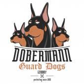 dobermann dog vector illustration