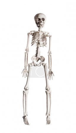 Skeleton On White Background