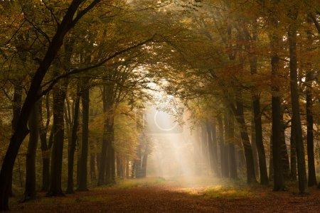 Autumn sunlight forest