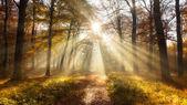 Autmn forest sun