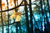 Autumnal yellow maple leaves in rays of sun on blurred background, foliage, sunlight
