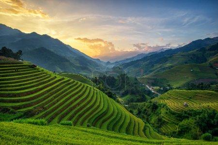 Photo for Rice fields on terrace in rainy season at Mu Cang Chai, Yen Bai, Vietnam. Rice fields prepare for transplant at Northwest Vietnam - Royalty Free Image