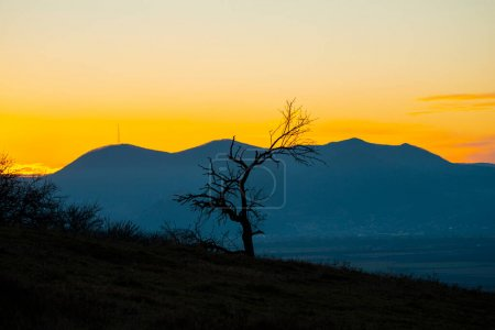 Photo for Sunset view of tree in mountains - Royalty Free Image