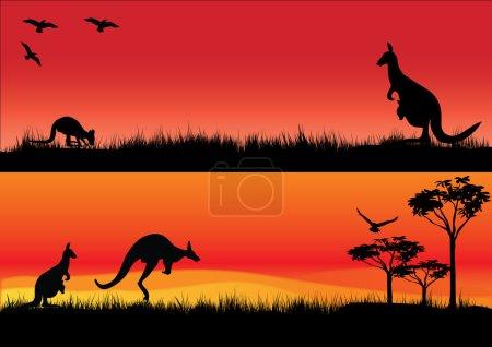 Australian Kangaroos in the sunset