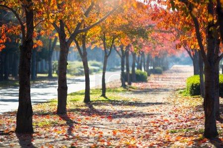 Photo pour Route en automne - image libre de droit