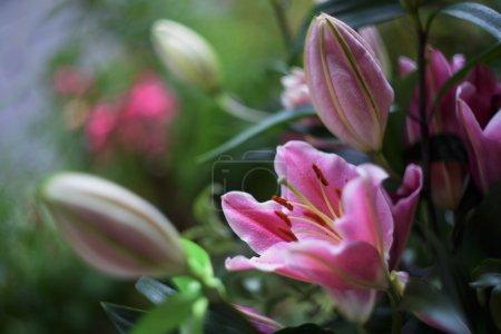 Photo pour Le beau bouquet de lis rose - image libre de droit