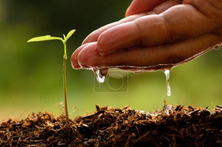 Photo pour Fermer la main mâle arrosage jeune arbre - image libre de droit