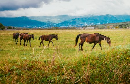 Green pastures of horse farms. Mare with foals.