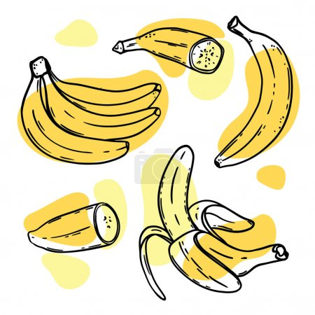 Illustration pour RIPE BANANAS Delicious Tropical Fruit Individually Peeled And In A Bunch In Sketch Style For Design Of Natural Products Shop Clip Art Vector Illustration Set - image libre de droit