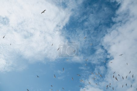 Flock of seagulls in sky