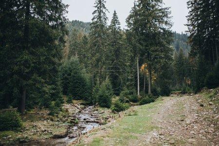 Photo pour Sentier de montagne le long d'un ruisseau de montagne par la forêt de pins - image libre de droit