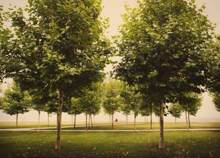 Photo pour Arbres dans le parc, photo teintée - image libre de droit
