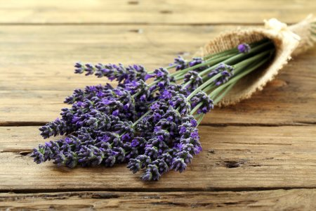 Bunch of fresh lavender