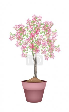 A Beautiful Pink Flowering Plants in Flower Pot