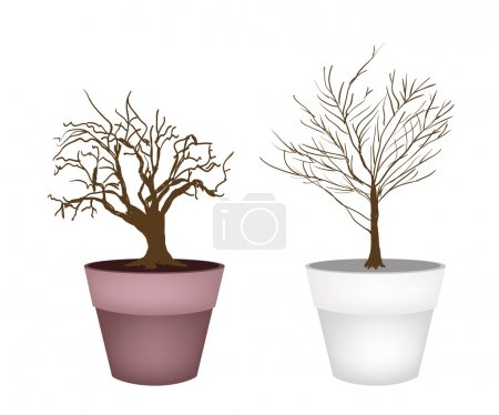 Two Abstract Isometric Brown Trees in Flower Pot