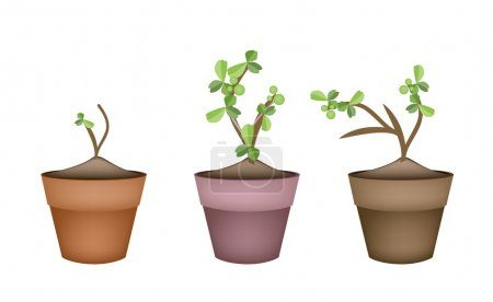 Bonsai Trees and Green Plants in Ceramic Pots