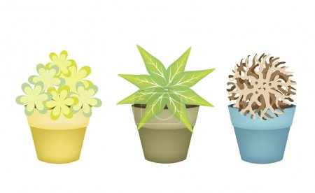 Lovely Trees and Plants in Terracotta Flower Pots