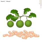 Healthcare Concept Illustration of Green Limes with Vitamin C and Minerals Tablet Essential Nutrient for Life