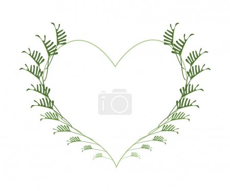 Fresh Philodendron Leaves in A Heart Shape