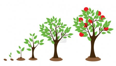 Illustration for Vector illustration of tree growth diagram isolated on white - Royalty Free Image