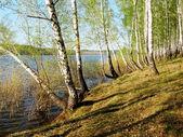 Natur Altaya